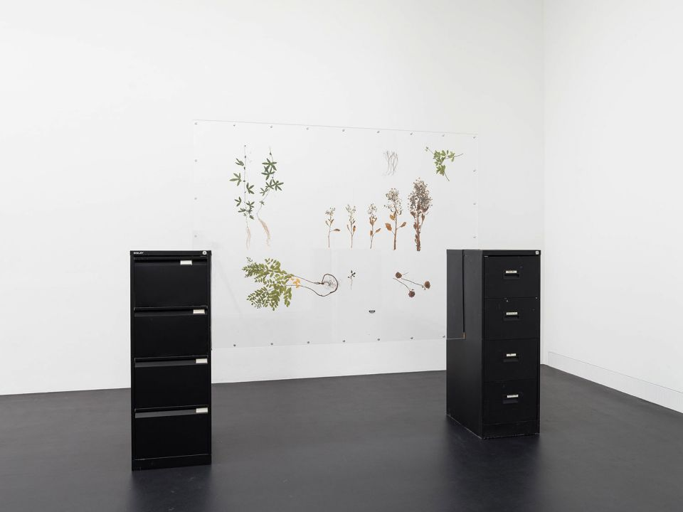 Rachal Bradley, Untitled (black), 2020, acrylic sheet, metal components, conservator's adhesive tape, metal filing cabinet, rubber seal, wood, magnets, adrenal stress diagnostic test, Borago officinalis, Eleutherococcus senticosus, Glycyrrhiza glabra, Pas