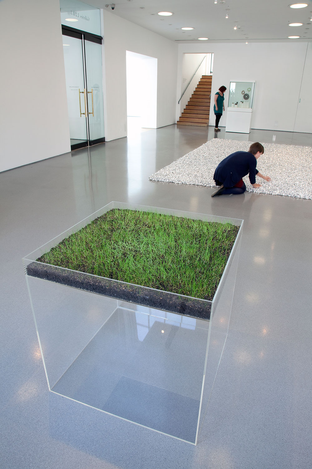 Installation view of Gallery 1, showing Hans Haacke's 'Grass Cube' (1967, acrylic plastic, earth, fescue grass, water)