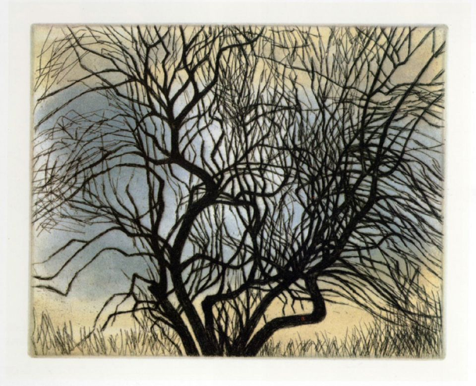 Trees V Spreading Branches 1979 (CGM 551) 168 x 206, etching and aquatint